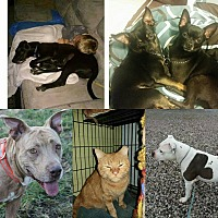 Adopt A Pet :: FOSTER HOMES NEEDED - GRANITE - Jerseyville, IL