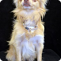 Adopt A Pet :: Teagan-Adoption pending - Bridgeton, MO