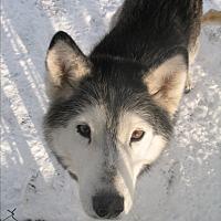 Adopt A Pet :: Parice - Egremont, AB