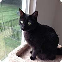 Adopt A Pet :: Buddy - Rochester Hills, MI