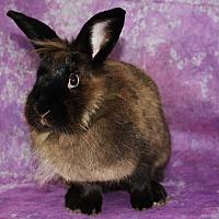 Adopt A Pet :: Bella - Wilmington, NC