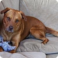 Adopt A Pet :: Zeus - Aurora, IL