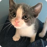 Adopt A Pet :: Matlock - Hendersonville, NC
