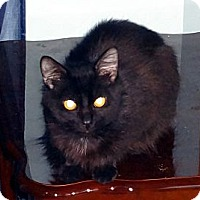 Adopt A Pet :: Ceaser - Saint Albans, WV