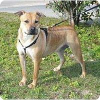 Adopt A Pet :: Auburn I - Graceville, FL