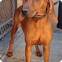 Adopt A Pet :: Scarlett - Canoga Park, CA