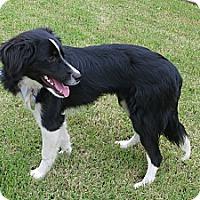 Adopt A Pet :: Brigid - VIDEOS - Monrovia, CA