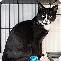 Adopt A Pet :: Savannah - Shelton, WA