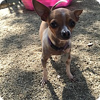 Adopt A Pet :: Billy - North Hollywood, CA