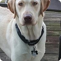 Adopt A Pet :: Zeus - Spring Valley, NY