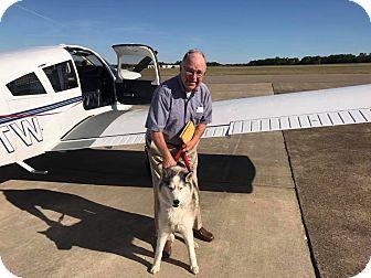 Siberian Husky Dog for adoption in Zanesville, Ohio - Dayton