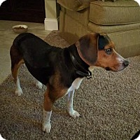 Adopt A Pet :: Ray - Toledo, OH