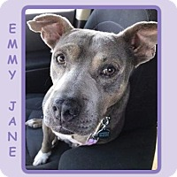 Adopt A Pet :: EMMY JANE - Dallas, NC