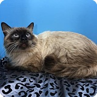 Adopt A Pet :: Sammy - Santa Fe, TX