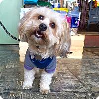 Adopt A Pet :: Frankie - Los Angeles, CA