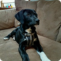 Adopt A Pet :: Ritchie - Union Grove, WI
