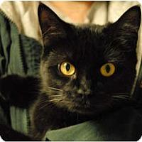 Adopt A Pet :: Nori - Lunenburg, MA