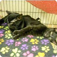 Adopt A Pet :: Sparky - Milwaukee, WI