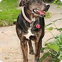 Adopt A Pet :: Sister - Hastings, NY