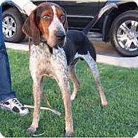 Adopt A Pet :: Elliot - Scottsdale, AZ