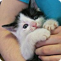 Adopt A Pet :: Winslow - Toledo, OH