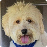 Adopt A Pet :: Rory - La Costa, CA