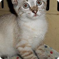 Adopt A Pet :: Empress - Chattanooga, TN