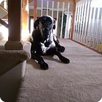 Adopt A Pet :: Lucy - Sacramento, CA