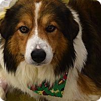 Adopt A Pet :: Buddy - Memphis, TN