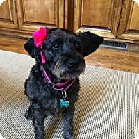 Adopt A Pet :: Cam - Alpharetta, GA