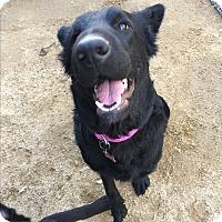 Adopt A Pet :: Gabby - Studio City, CA