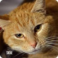 Adopt A Pet :: Simone - Niagara Falls, NY