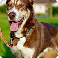 Adopt A Pet :: Jameson - Culver City, CA
