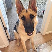 Adopt A Pet :: ROSE - Nampa, ID