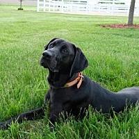 Adopt A Pet :: Trooper - Island Lake, IL
