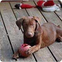 Adopt A Pet :: Ariel - Cumming, GA
