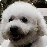 Adopt A Pet :: Melody - La Costa, CA