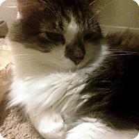 Adopt A Pet :: Luke and Beau - Nolensville, TN