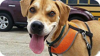 Hound (Unknown Type) Mix Dog for adoption in New Orleans, Louisiana - Thomas