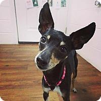 Adopt A Pet :: Joy - Lake Odessa, MI