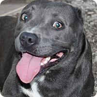 Adopt A Pet :: Sky - Savannah, MO