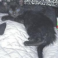 Adopt A Pet :: Spencer - Miami, FL