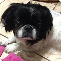 Adopt A Pet :: Lola - Windermere, FL