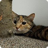 Adopt A Pet :: Wee One - Elyria, OH