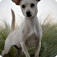 Adopt A Pet :: Blanca - Pipe Creed, TX