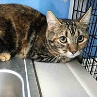 Adopt A Pet :: LIBBY - Canfield, OH
