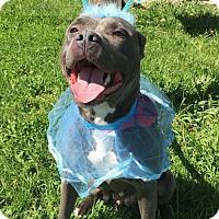 Adopt A Pet :: CARRARA - Morgantown, IN