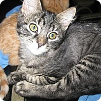 Adopt A Pet :: Ruffles - Clearfield, UT