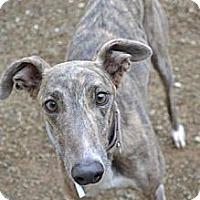 Adopt A Pet :: Bell (Nitro Blue Bell) - Chagrin Falls, OH