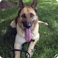 Adopt A Pet :: Sophie - Staunton, VA